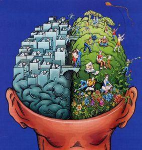 Afbeeldingsresultaat voor hersenhelften tekening