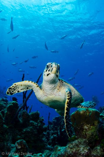 Diving Grand Cayman|Underwater Photography Guide