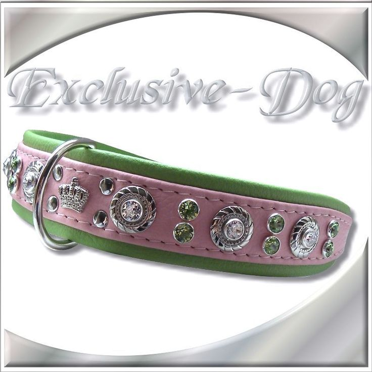 Rosa Mops Hundehalsband Strasshalsband Leder grün