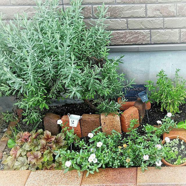 女性で、のガーデニング雑貨/ガーデニング/ガーデン/花壇作り/花壇/ピック…などについてのインテリア実例を紹介。「雨続きでダメになる花も増えてきました。綺麗を保つのは難しい 」(この写真は 2016-09-28 08:46:43 に共有されました)