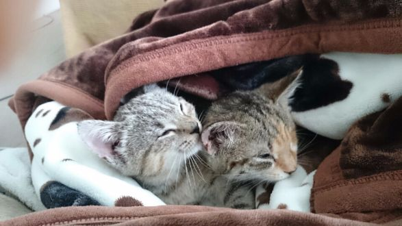 Blinky and Boots' quality of sight and life will be greatly improved once they have surgery and begin to recover from their rough start to life. #itsMYCAUSE #crowdfunding #fundraising #kittens #cat #feline #animals