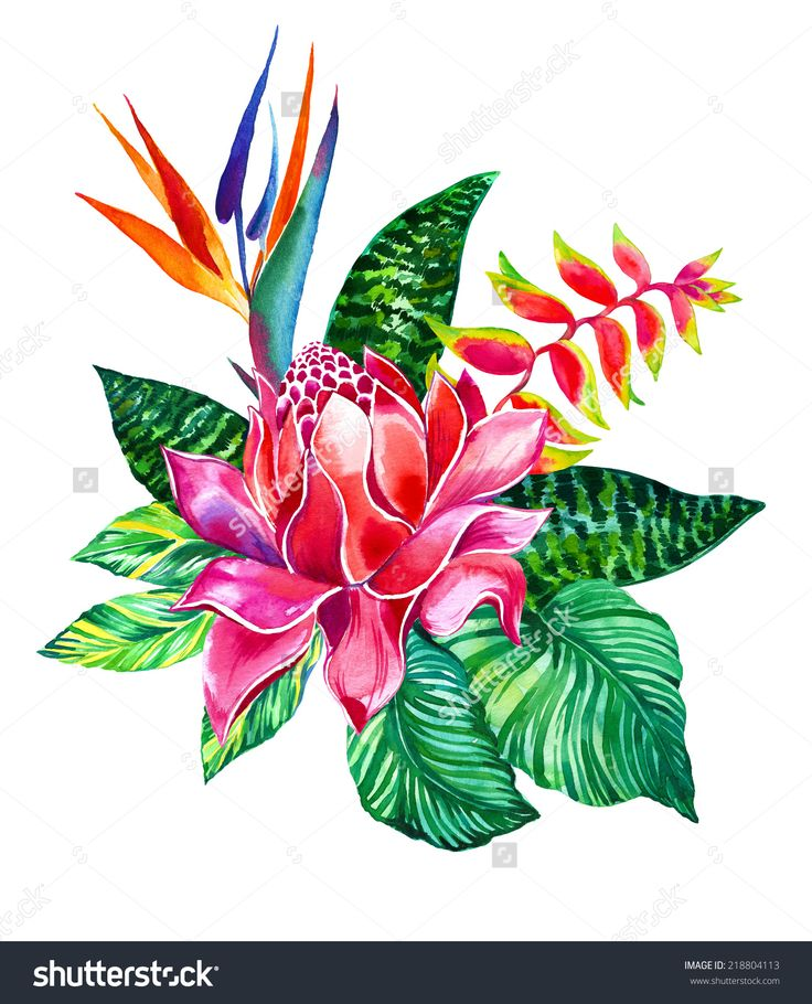Bouquet Of Jungle Flowers With Ginger, Heliconia, Bird Of Paradise ...