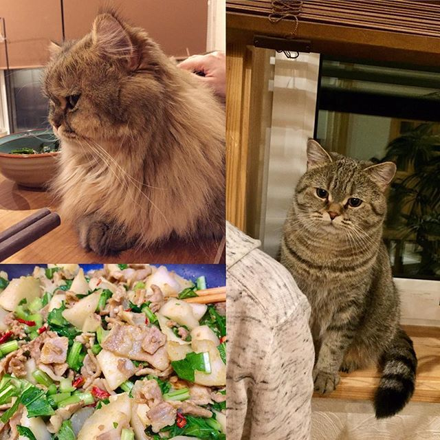 至近距離で見つめられながら夕ご飯🍽👀💦 背後は ジルどん すぐ横は テト #dinnertime #homemadedinner #homemadecooking #healthy #currypowder #healthyfood #turnip #porkbelly #garlic #cutecat #catlife #catlove #catlovers #catoftheday #catsofinstagram #fluffycat #夕ご飯 #カブ #蕪 #ニンニク #豚バラ #カレー粉 #パプリカ #ふわもこ部 #猫のいる生活 #猫のいる暮らし #愛猫 #視線