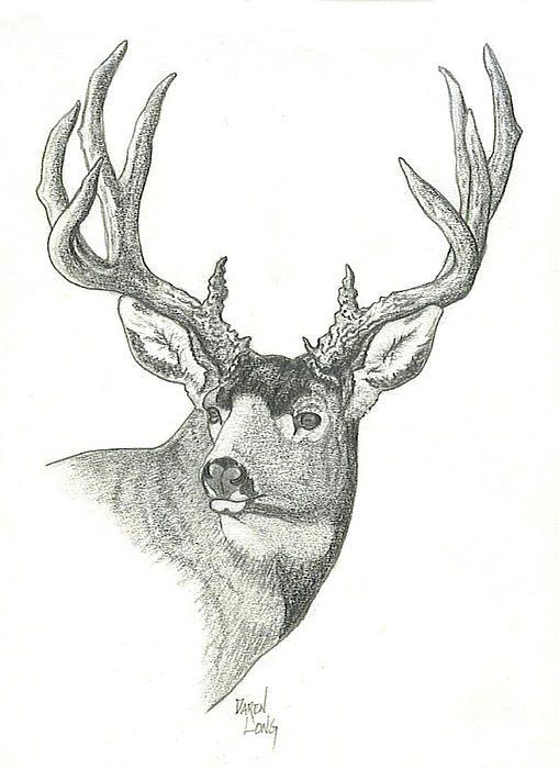 Mule Deer Buck Sketch Drawing  - Mule Deer Buck Sketch Fine Art Print