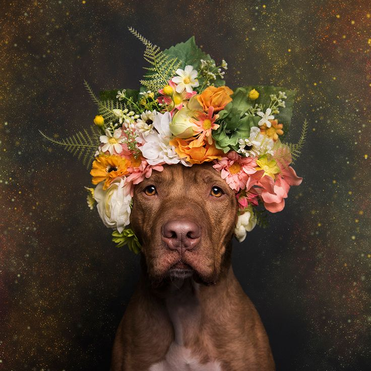 Using the Magic of 'Flower Power' to Soften the Pit Bull's Image