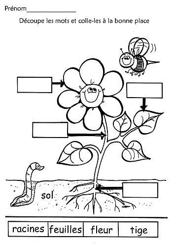 La decouverte du monde vivant et non-vivant.  Plusieurs fiches qui traitent aussi des plantes.