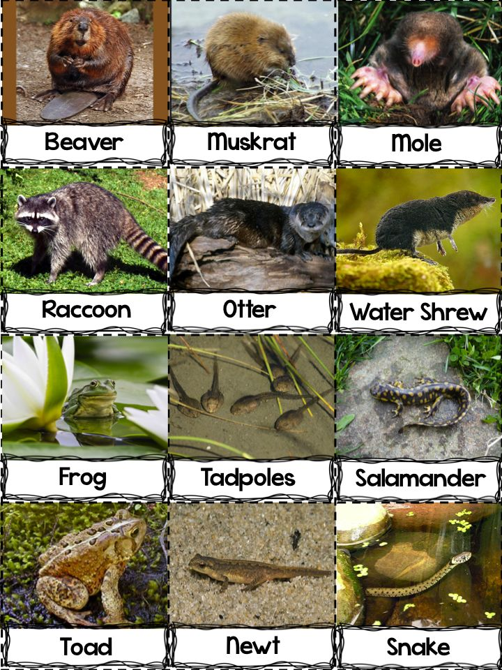 89 best frog images on pinterest day care frogs and school for Pond animals