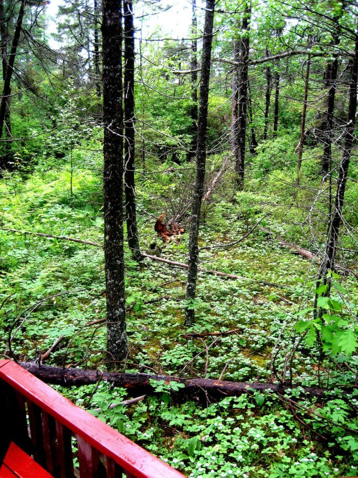 The Bangor City Forest is comprised of over 680 acres of wildlife habitat and forest.