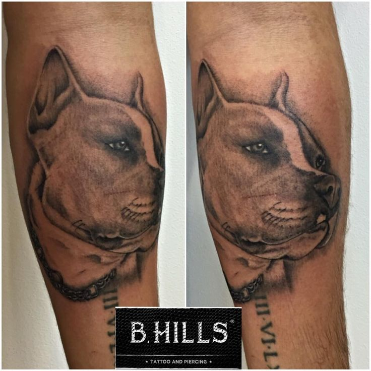 #Realistic #Dog #Tattoo #ink #shade #black&grey #tattooartist #passionart #art #bhillstattoo #ladyoktopus