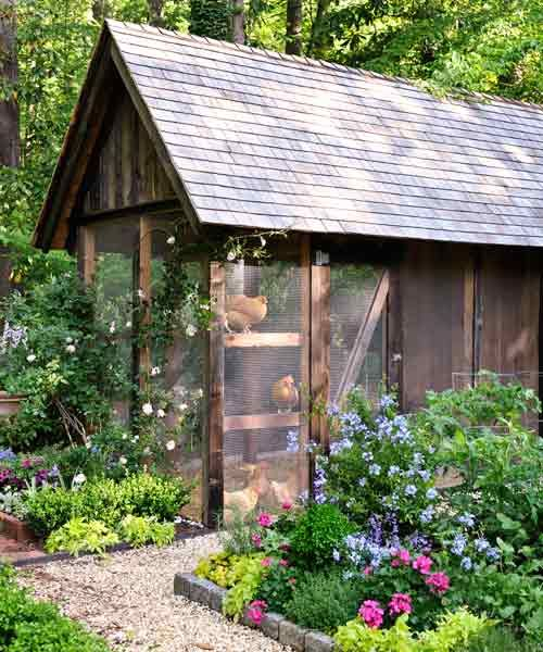 Surrounded by raised garden beds, this deluxe chicken coop has what it takes to keep chickens safe, healthy and laying fresh eggs: a minimum 4-by-8 foot screened-in run and a 4-by-4 foot critter-proof coop for up to three hens.   Photo: Matthew Benson   thisoldhouse.com