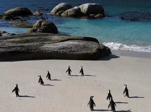 Boulders Bay Capetown - South Africa