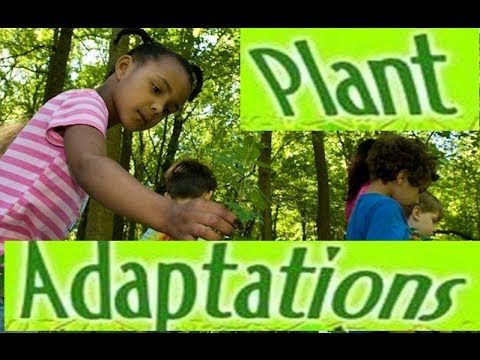 Adaptations in Plants -Video lesson for Kids Adaptations are special feature in plants and animals which help them to survive in the habitats they live in. In this animation video,children can learn adaptations in desert and aquatic plants.This video is suitable for grade 3,grade 4 and grade 5 and elementary school students .