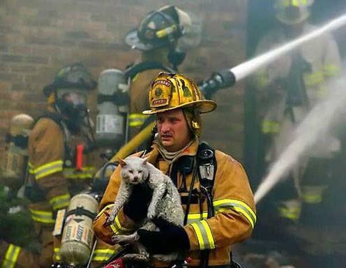 Cat rescue - Meow Aum - Timeline pictures