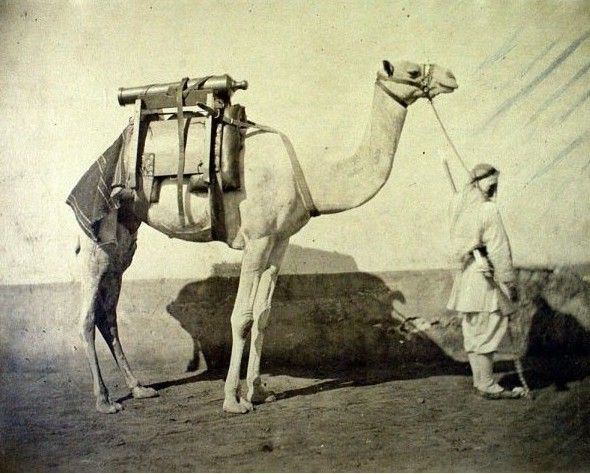 Camel Artillery in Egypt, 1866 by Gustave Le Gray