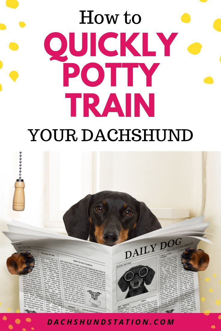How To Crate Train A Dachshund Puppy Training Crate Training