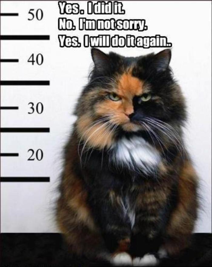 Evil cat. Lol