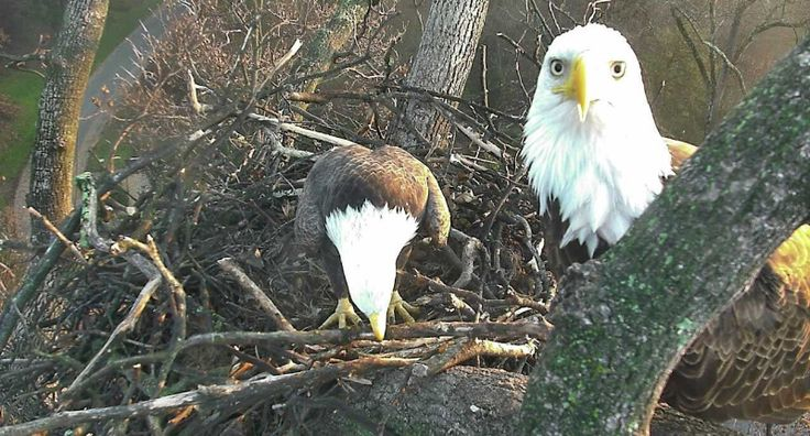 Use eagle cams as a fun way to get your children involved in nature.