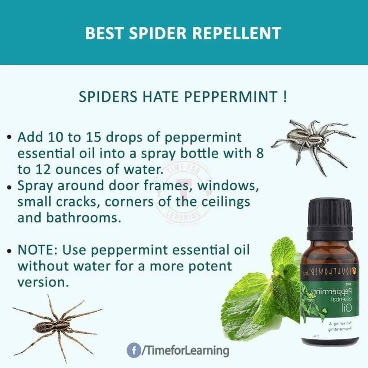 Great HOME REMEDIES you won't forget. - Healthy Food World   Best Insect Repellent Useful Info ! - Healthy Food World
