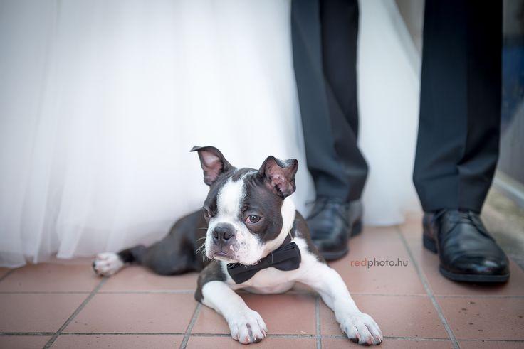 esküvő / wedding, redphoto.hu, Vörös Ákos