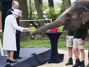 Η Ελισάβετ τάισε μπανάνες... έναν ελέφαντα.