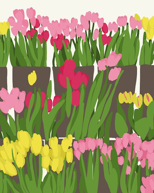 Grocery store tulips. By jorey Hurley #floral #botanical #art