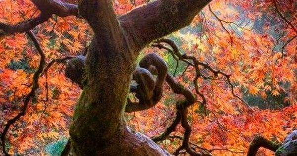 Dragon Tree Portland | Bahçeler, Beautiful and Güneş on Pinterest