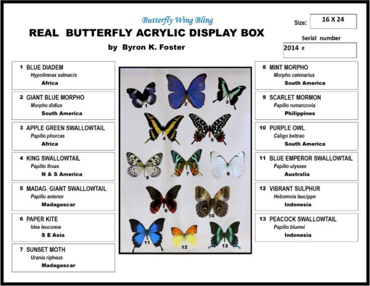 "Acrylic Display Box - 13 Butterflies - 16"" x 24"" - #91624-01"