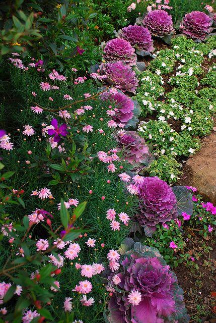ornamental kale in the mix | Envy | Garden, Autumn garden ...