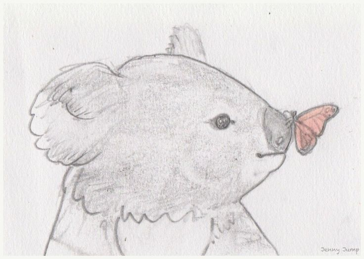 Quick drawing, baby koala meets butterly, inspired by video from Symbio Wildlife Park, pencil drawing, Jenny Jump
