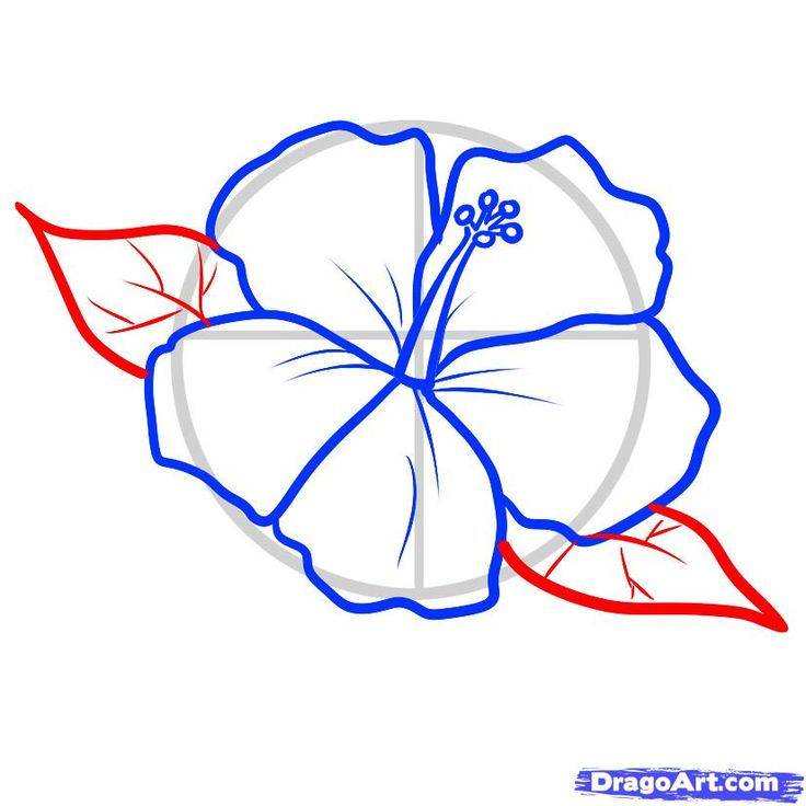 Hibiscus Pattern To Draw How A Hawaiian Tattoo Step By