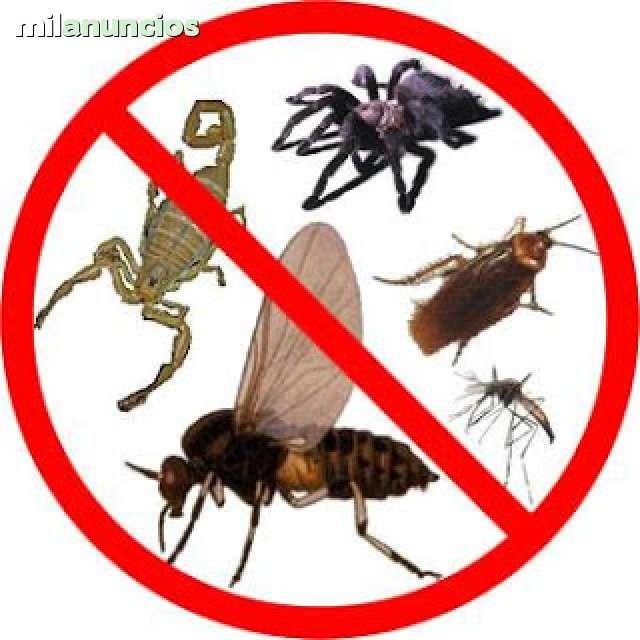. ELIMINACION Y CONTROL D PLAGA EN GENERAL Realizamos trabajos de fumigacion y control de plagas en general con gel, sin olores ni molestias. No es t�xico para la familia, ni�os, ni las mascotas. Eliminamos toda clase de cucarachas, ratas, ratones hormigas