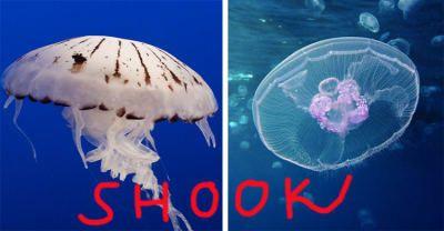 Anêmonas e esponjas-do-mar também têm apenas um único orifício para comer e excretar. Nojento ou eficiente? — coldairballoon