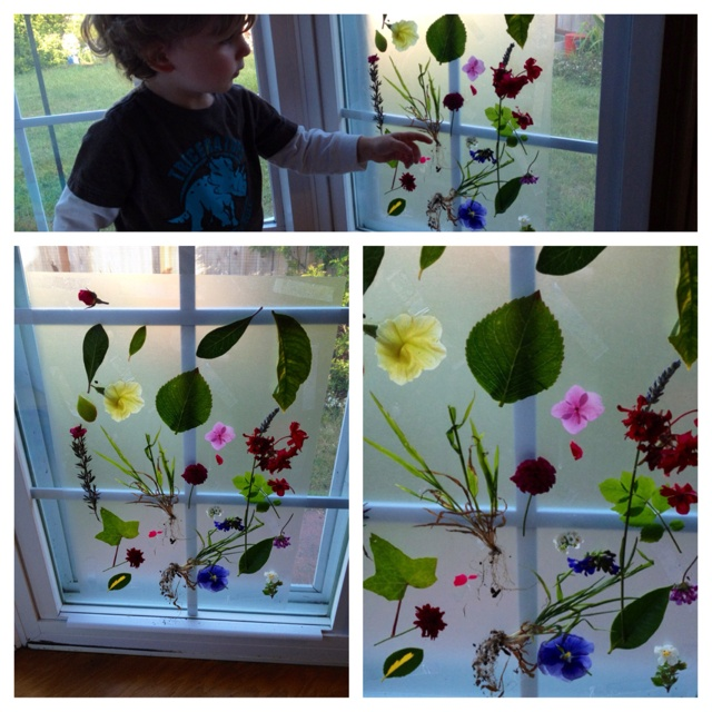 Garden walk treasures! Used double-sided tape to put a piece of contact paper on the window so the sticky side faces out. Anything lightweight sticks to it! I wanted to start teaching my toddler about plants and flowers so we took a garden walk and collected leaves, flowers and some weeds with the roots and dirt attached.