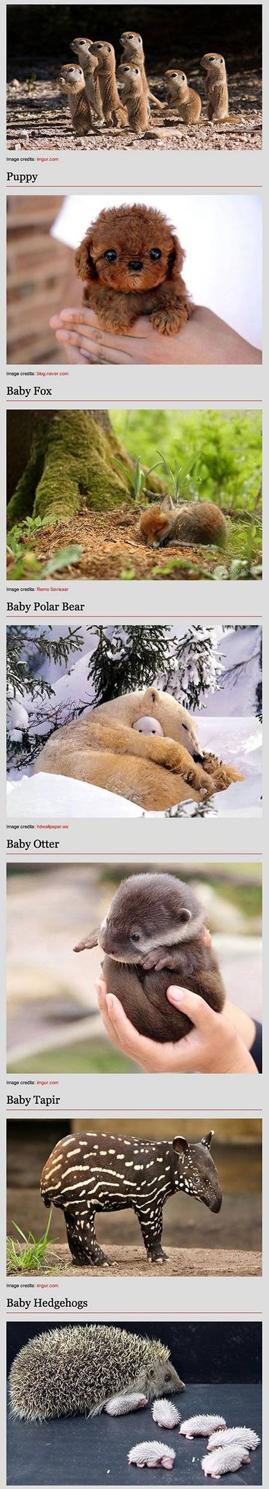 Some things are so cute they make me cry! Like the baby albino koala!