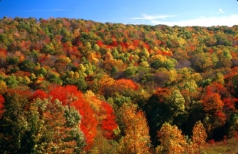 I would travel through the beautiful fall folliage  #ridecolorfullyFolliage Ridecolorfully, Favorite Places, Fall Colors, Dreams Vacations, Crayons Boxes, Beautiful Places, Beautiful Fall, Fabulous Fall, Fall Folliage