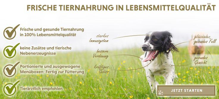 Basisnahrung für Hunde by www.hundemarkt.ch