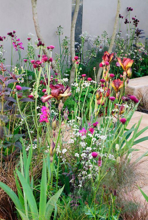 Iris Gladiolus Sambucus Shrub In Flowers Fennel