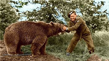 """Wojtek The Bear - Polish War Hero /WWII/ Wojtek was officially enlisted in the Polish Army and given the rank of Private. Private Wojtek """"helped"""" unload trucks packed with heavy artillery boxes."""