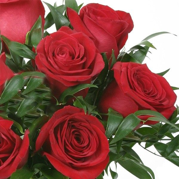 Nine eye-catching red roses make up this classic arrangement set in a black glass cylinder vase. Send roses from your local NYC florist, PlantShed. Manhattan Red | Roses | Flower Delivery NYC Florist | Plantshed.com