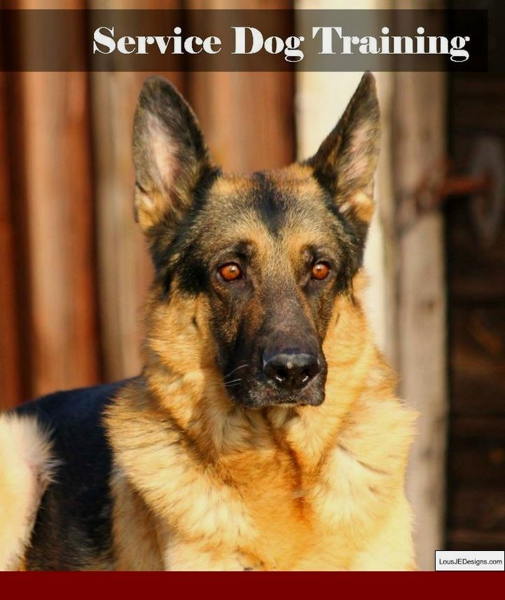 How To Train Dog To Stop Barking At Doorbell And Pics Of How To