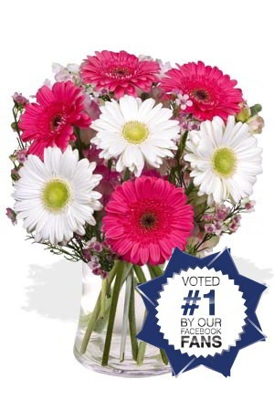 Chirpy - The sight of this chirpy collection of colourful Gerberas will have you whistling as happily as a bird. Shown here in a pretty combination of pink and white, Gerberas are available in a multitude of colours, make sure you specify your favourite colours. $60.70