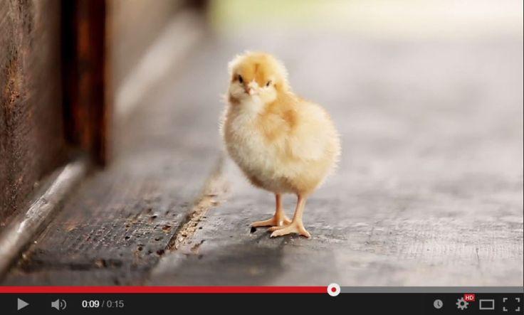 Avete visto in #TV i diversi spot Le Naturelle? Sul nostro canale YouTube potete trovare tutte le diverse versioni e un piccolo extra per i nostri fan! https://www.youtube.com/channel/UC01IpCNh766gaYRP_pRnQGQ