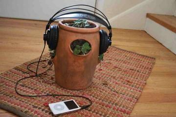 Επηρεάζει την ανάπτυξη των φυτών η μουσική;