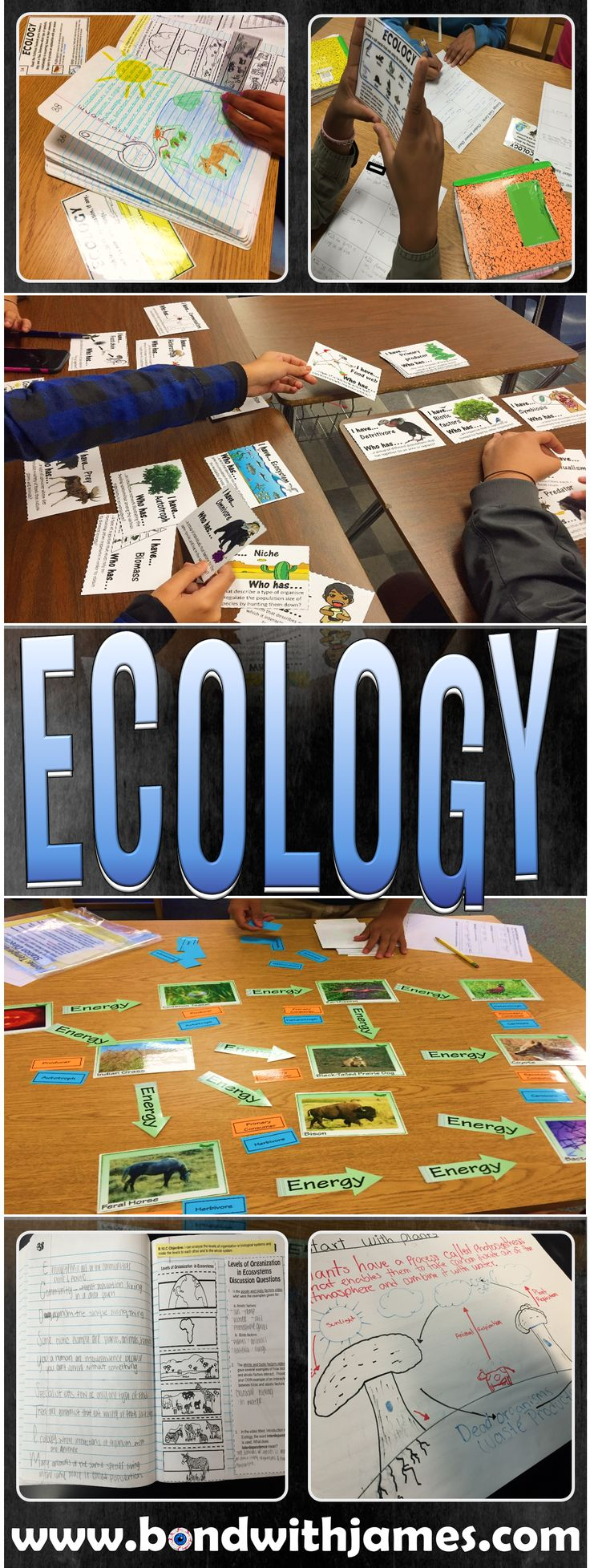 7 ideas and activities that I used during my ecology unit.