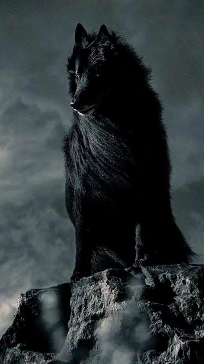 Wolf (@wolfvargwolf) | Twitter