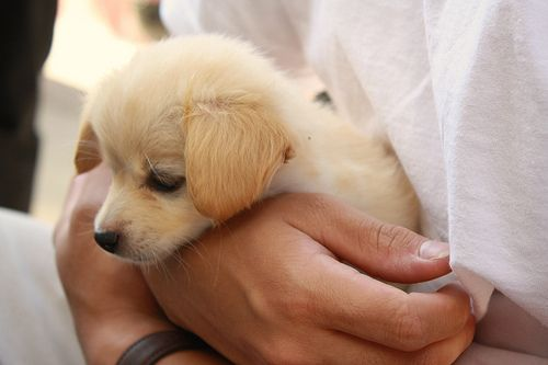 I want the puppy!!!!!
