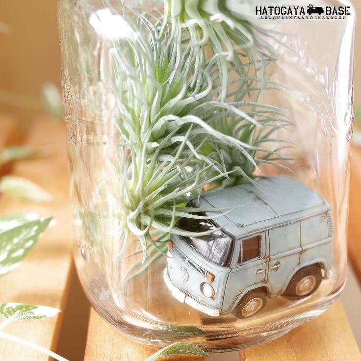 ワーゲンバスのチョロQにエイジング塗装を施しましたエアプランツの造花と共にガラスボトルに入れるととても可愛くなりました塗ってみると分かるのですがこのチョロQかなりリアルなディテールなんですちなみにこのレイトバスはYANASE物の右ハンドル仕様です笑 #vw #volkswagen #vwtype2 #aircooledvw #choroq #choroqzero #エアプランツ #フェイクグリーン #アーティフィシャルフラワー #造花 #ミニカー #チョロQ #チョロQゼロ #ワーゲンバス #メイソンジャー #ハンドメイド #男前インテリア #ボタニカル #タニクスワーゲン