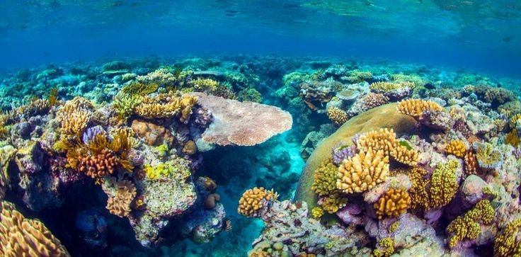 44 surreal scenes from Australia's Great Barrier Reef - Matador Network