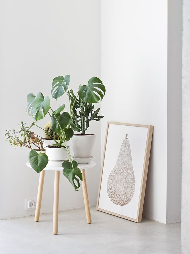 put plants on a small side table to raise off the ground