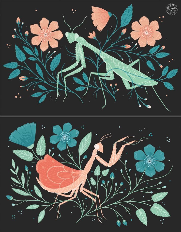 I love how fascinating and bizarre praying mantises look, like tiny, awkward aliens! I created this dyptich of two mantises, one at rest, and one poised to attack! Digital illustration ©Perrin 2015  www.madebyperrin.com